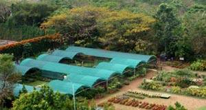 Center for Environmental Studies