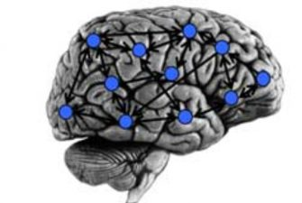 Modeling fMRI BOLD Correlates of Neural Circuit Activity