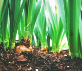 Agriculture & Risk Management